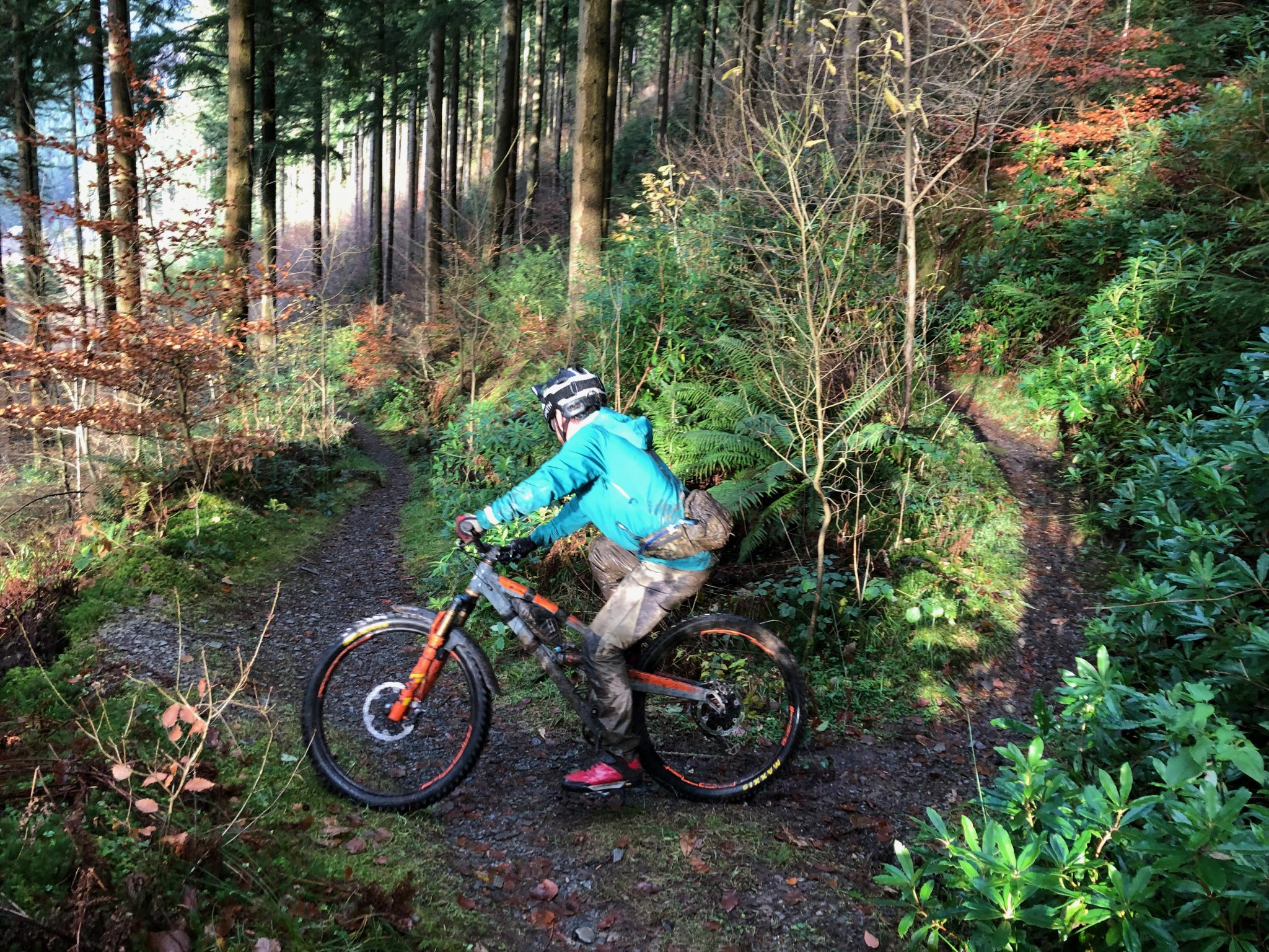 Guided ride, wales, Dyfi valley, uplifts, trips and adventures Wales, Forest of dean guide rides